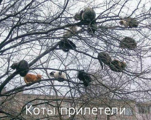 Кошаки...